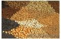 высокоурожайные импортные яровые семена