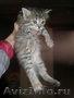 Красивые домашние котята в дар