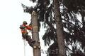 Спил, обрезка, кронирование деревьев профессиональными альпинистами, Объявление #1148137